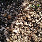 Microplásticos en el Carmolí
